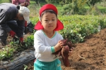 芋掘りの写真